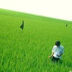 映画「リリイ・シュシュのすべて」の挿入歌「グライド / Lily Chou-Chou(リリイ・シュシュ)」