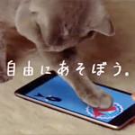 CM「Google Nexus 7(グーグル ネクサス 7)Cat篇」の曲「CMオリジナル曲 / 澤田かおり」