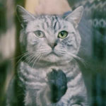 CM「YKK AP 窓と猫の物語」の曲「CMオリジナル曲 / Sean Christopher(ショーン・クリストファー)」