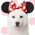 CM「SoftBank ソフトバンク Disney ディズニー」の曲「Bibbidi Bobbidi Boo / Boop Sisters」